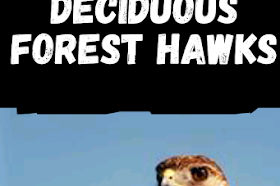 deciduous forest hawks Interesting facts