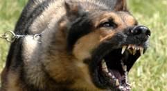 Comportamiento Agresivo Del Perro