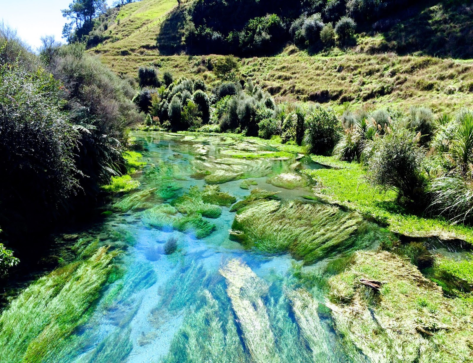 New Zealand's best hikes | Te Waihou Walkway