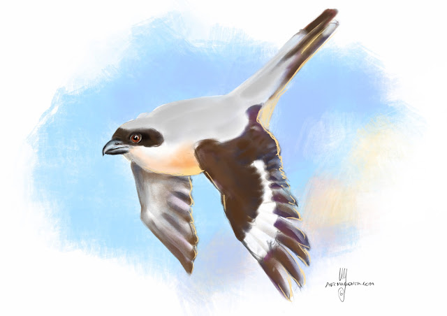 Lesser grey shrike bird painting by Artmagenta