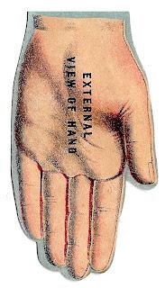 hand human anatomy image illustration vintage clipart