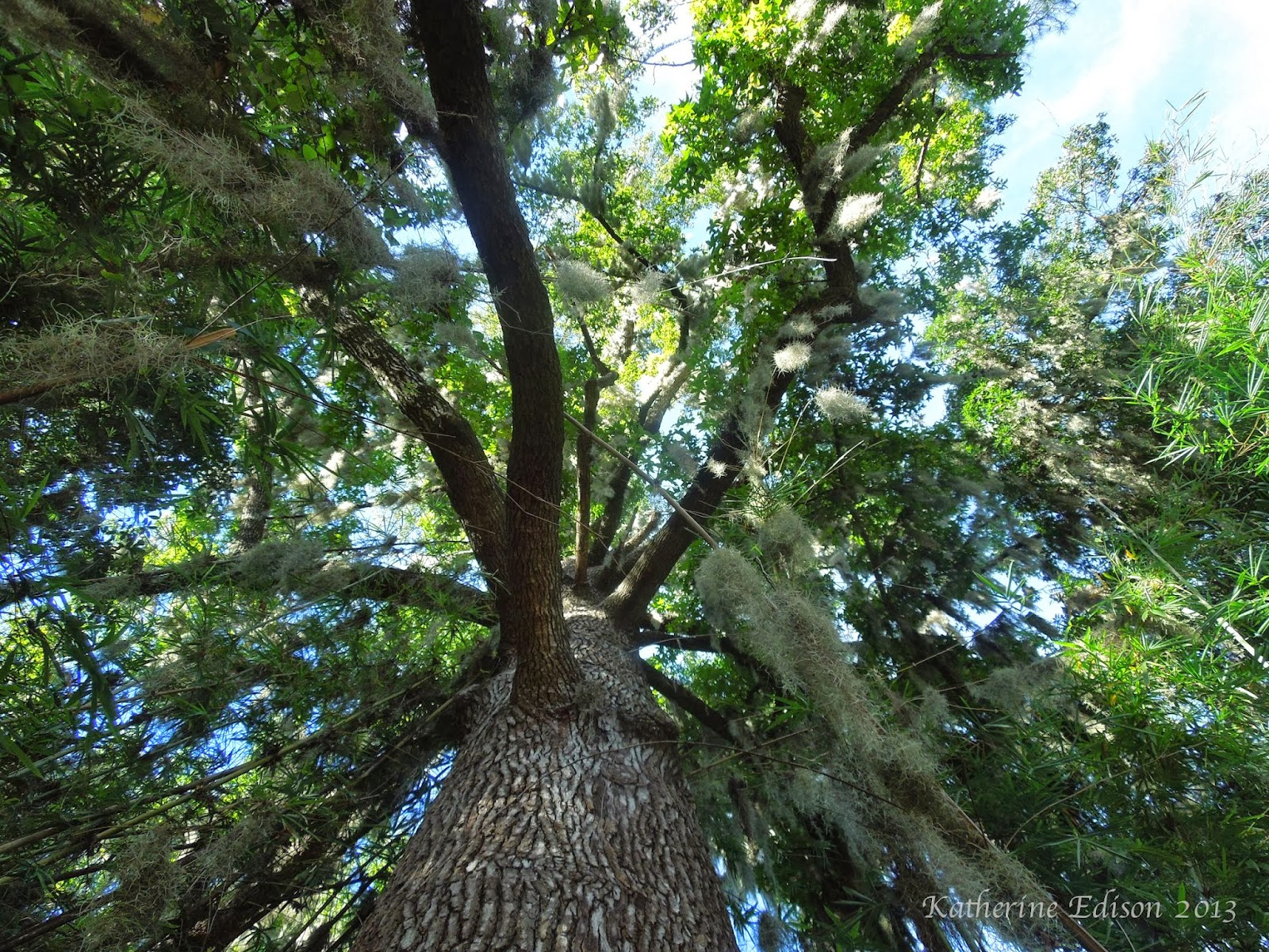 Earth Teach Me My Favorite Trees