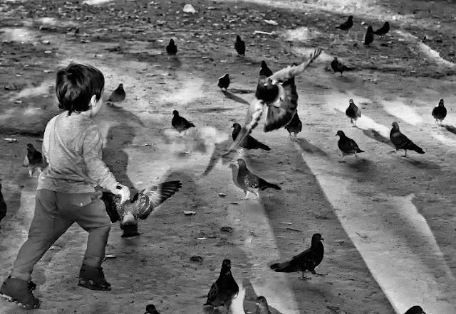 ByN.Niño corriendo palomas en parque.