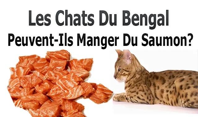 Les Chats Du Bengale Peuvent-Ils Manger Du Saumon?
