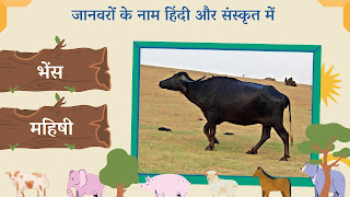 buffalo name in sanskrit and hindi with images