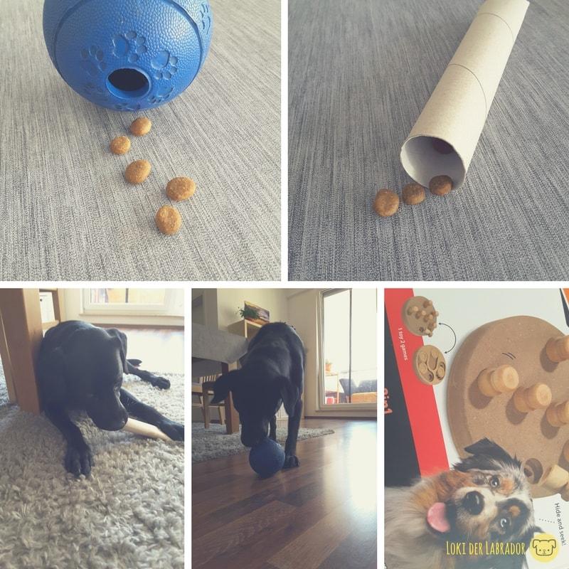 Fotocollage Hunde Intelligenzspielzeuge
