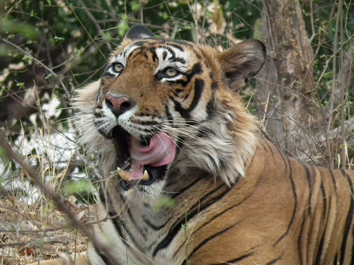 TIGER-T1 MINI SUPER-HD NEW SOFTWARE DOWNLOAD - FILE YOU NEEDED
