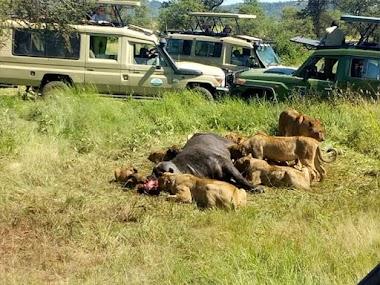 Privet Safaris Tanzania national park booking with thebiggmaxculturaltours