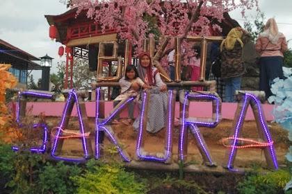Bukit Sakura Lampung, Tempat Wisata Baru Ala Jepang yang Ngehits Kekinian Banget