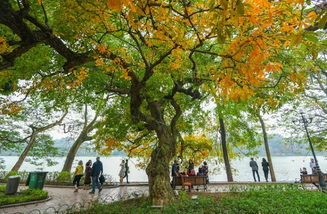 Hanoi seems to be in autumn as the yellow and red leaves covering throughout the streets