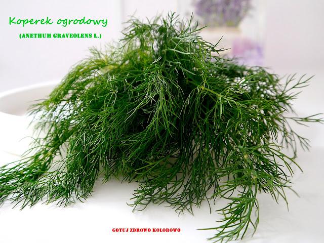 Koperek ogrodowy - zbiór, przechowywanie, mrożenie - Czytaj więcej »
