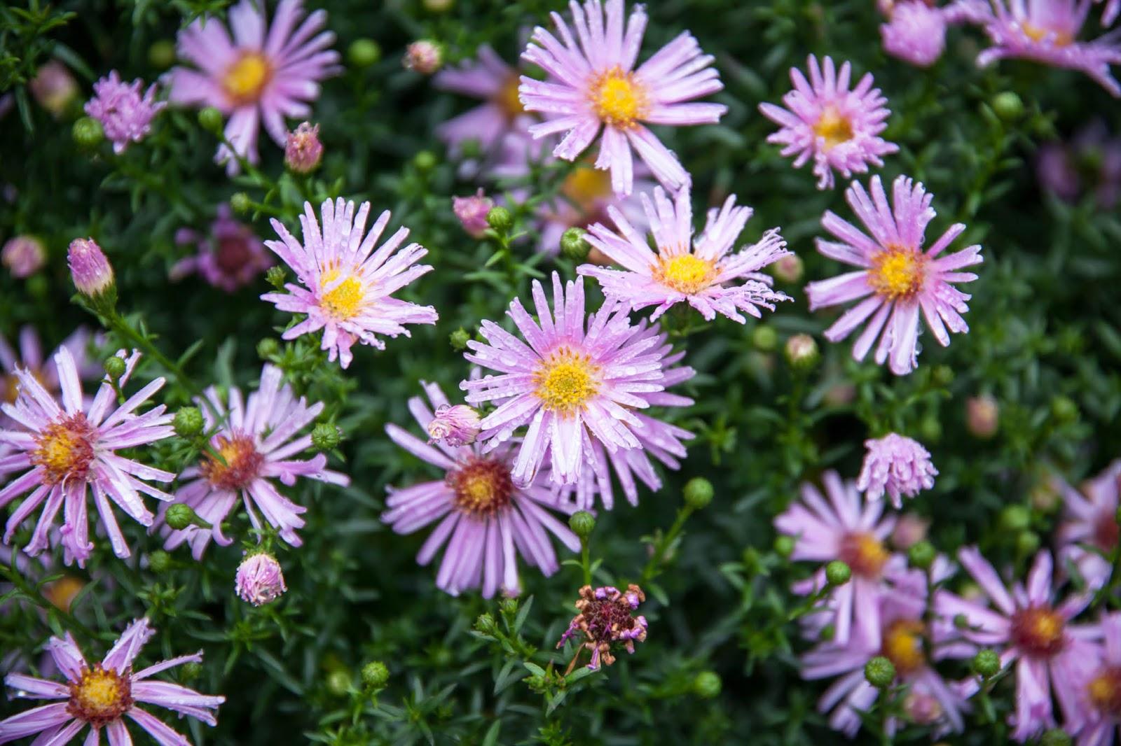 kukkia syksy