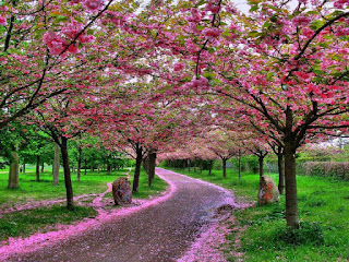 hình ảnh hoa cỏ mùa xuân