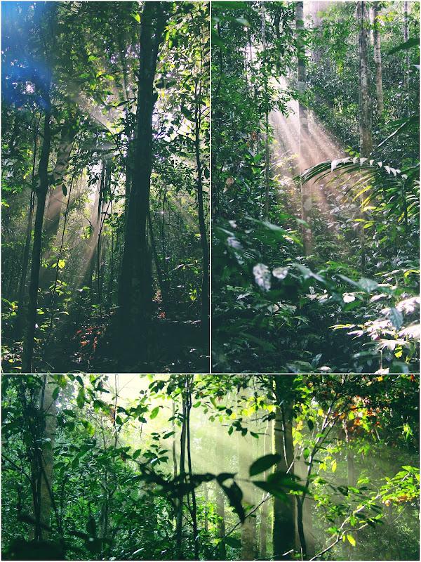 Pemandangan dalam hutan sepanjang Trek mendaki Gunung Angsi via Ulu Bendul