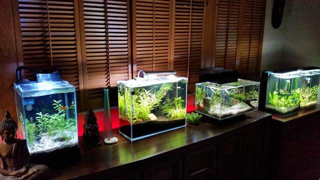 كيفية صناعة حوض سمك الزينة في المنزل