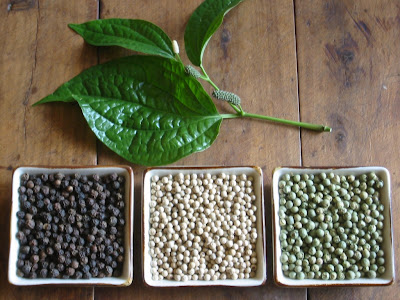Pimenta do reino variedades