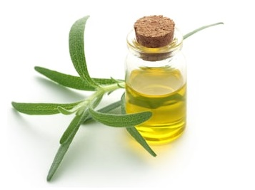 Hair Loss Prevention Oil Made of Rosemary