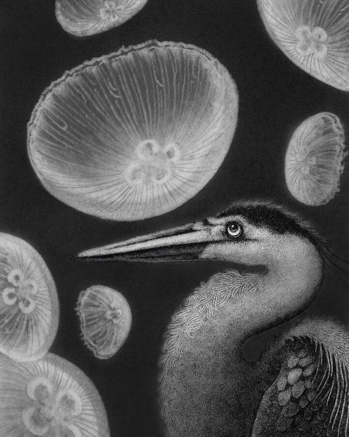 10-The-heron-and-the-jellyfish-Juliet-Schreckinger-www-designstack-co