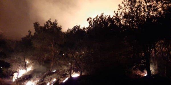Έβρος: Οργή της WWF Ελλάς για πυρκαγιά που φαίνεται να ξεκίνησε από εκπαιδευτικές βολές