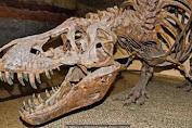 Ditemukan Buaya Yang Berjalan Dengan Dua Kaki Mirip Dinosaurus