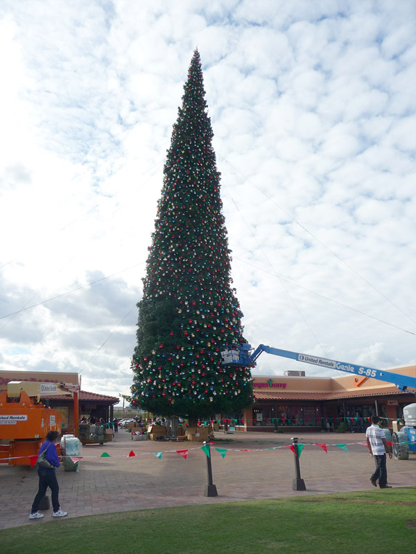 Arizona's Largest Christmas Tree Arrives at Anthem Outlets. Nov 12, 2011 - Arizona's Largest Christmas Tree Arrives At Anthem Outlets