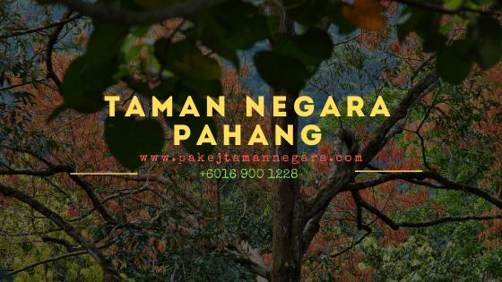 Pakej aktiviti taman negara pahang 2023