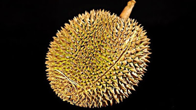 Cara memilih durian montong