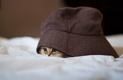 Gato muy tierno