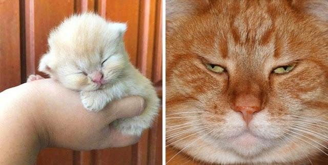 Подтверждение того, что коты растут ну очень быстро