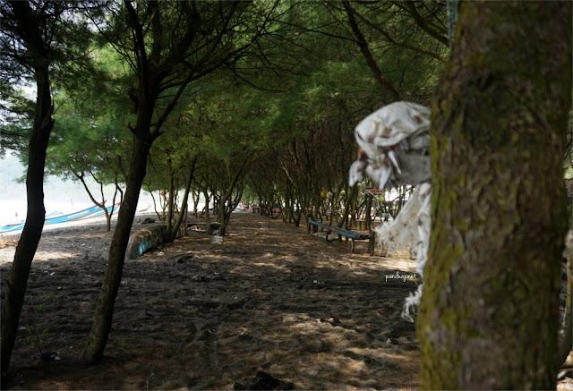 Pohon Cemara Udang di Timur Pantai Jolosutro