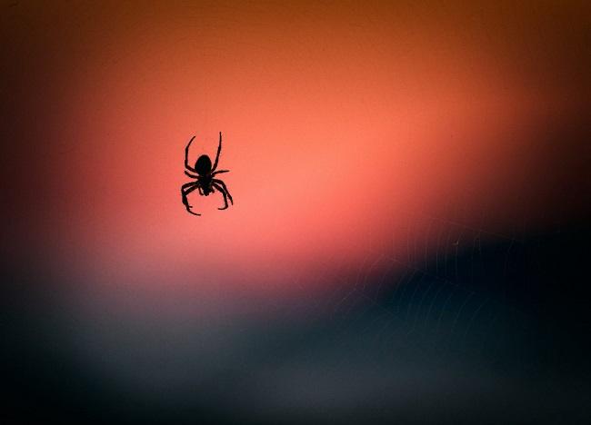 Arañas. Crónicas de un bibliotecario en tierras muiscas (I)