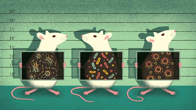 Probióticos | Opciones Veganas