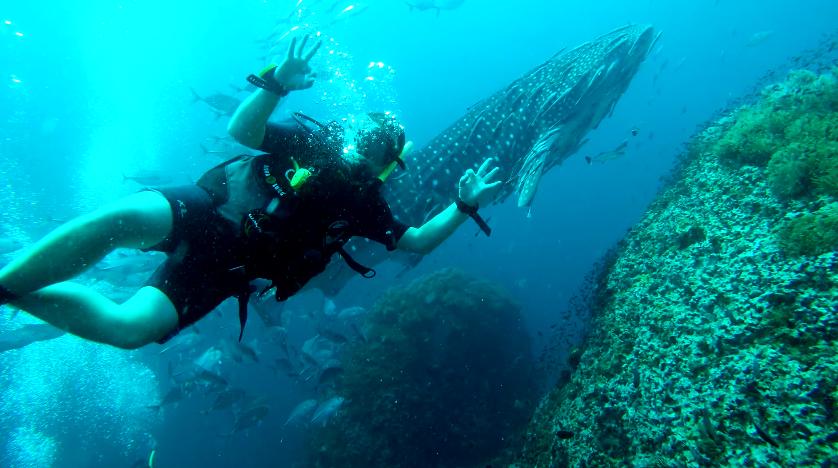 visit white shark in Koh Tao island, Thailand