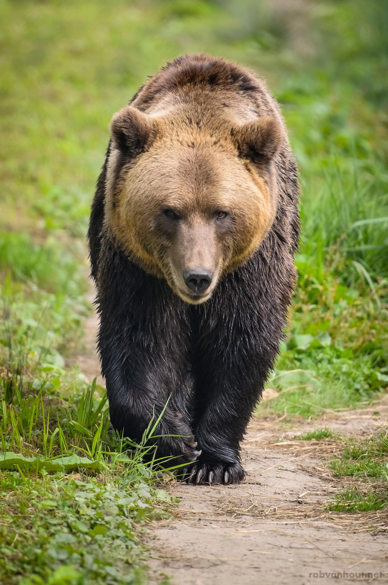 Bear Trail — Bärenwald Müritz