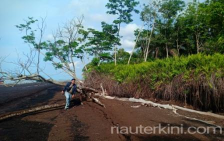 Tanggulangi Abrasi, Menko Kemaritiman dan Tenaga Ahli Akan Kunjungi Pulau Bengkalis
