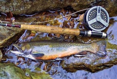 brook trout fishing, trout fishing, brook trout fishing tips, fishing,