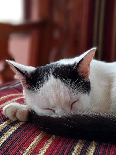 Efek BLUR pada foto kucing