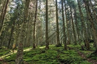 Berkelana Di Hutan Pinus Gunung Pancar, Bogor