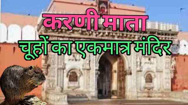 राजस्थान में है चूहों का एकमात्र करणी माता मंदिर