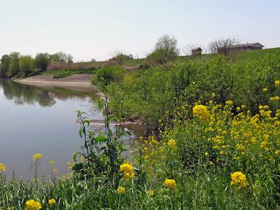 首都圏外郭放水路・庄和排水機場付近