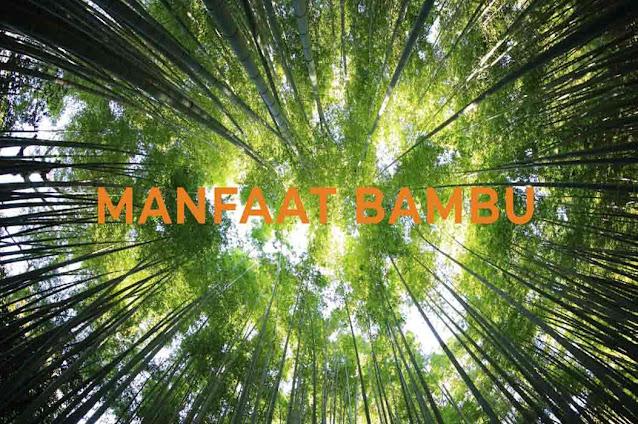 manfaat bambu bagi kehidupan kita