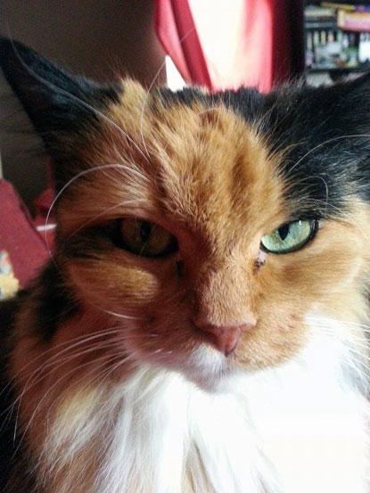 Shy cat Bonnie