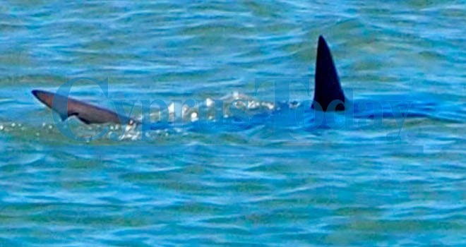 Shark spotted off North Cyprus shore