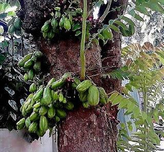 Sebutkan Jenis Produk Kesehatan Khas Daerah dari Bahan Hewani dan Nabati