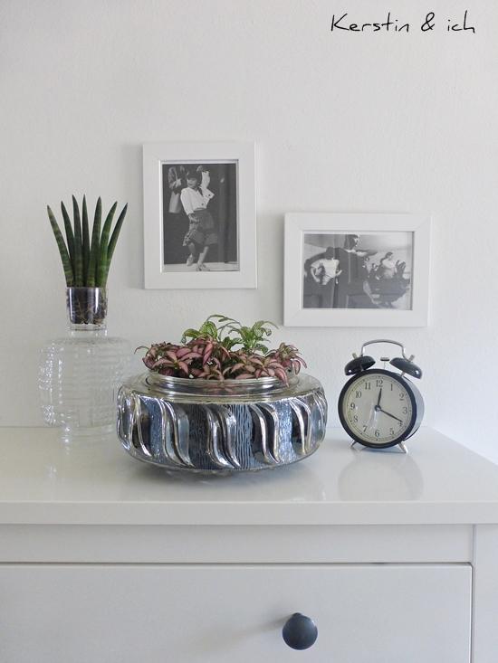 Stillleben grüne Pflanzen, schwarz-weiß Fotos und Glas