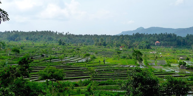 Bali in Indonesia, 10 days between temples and rice terrace