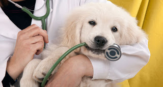 How to treat genital area when dogs?