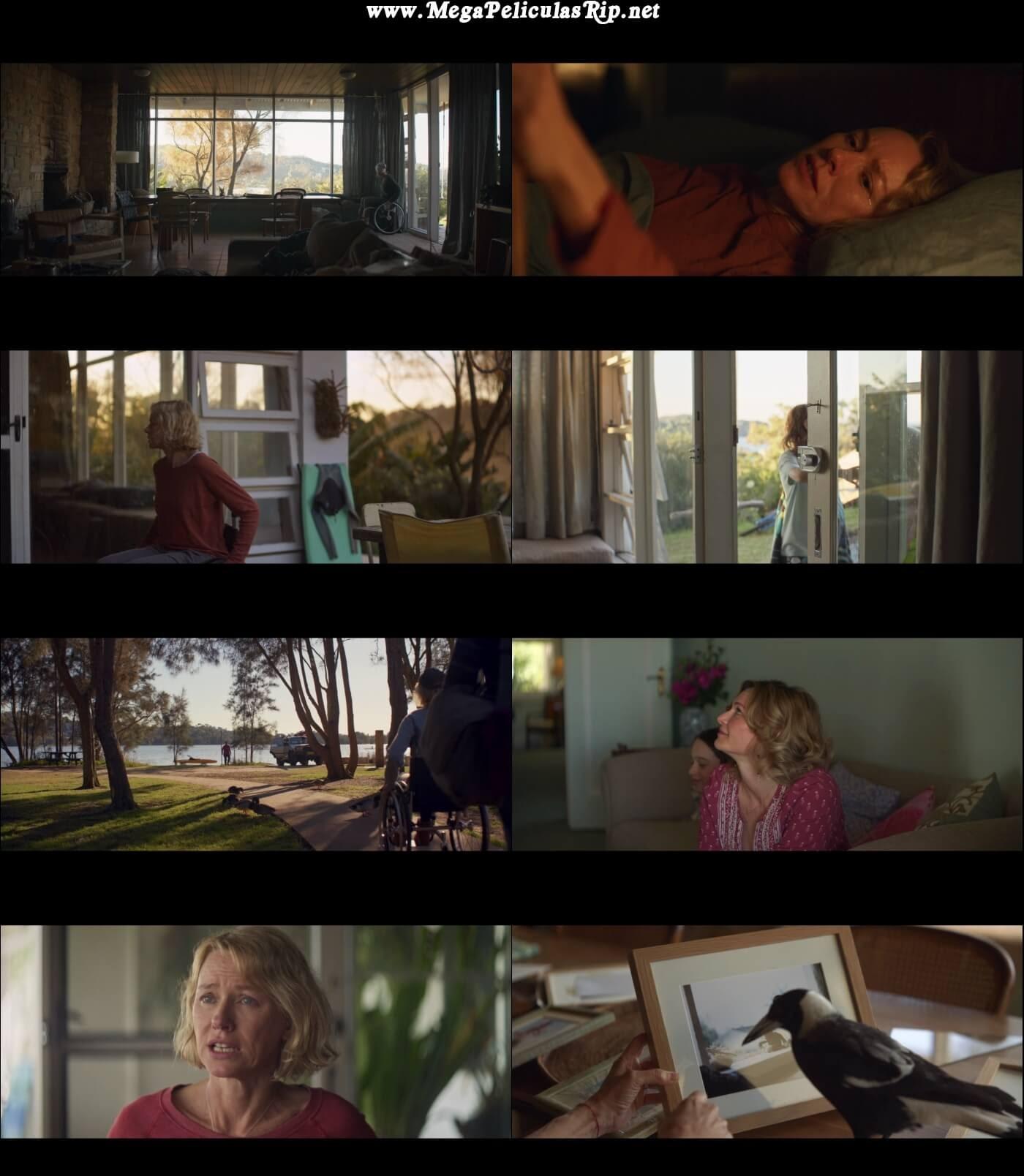 Un Milagro Inesperado 1080p Latino
