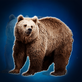 Games2Jolly The Grizzly Bear Rescue