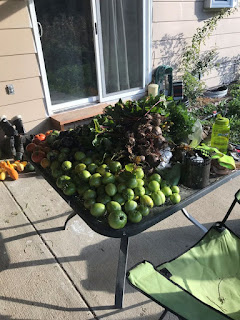 Patio table full of beets and tomatoes
